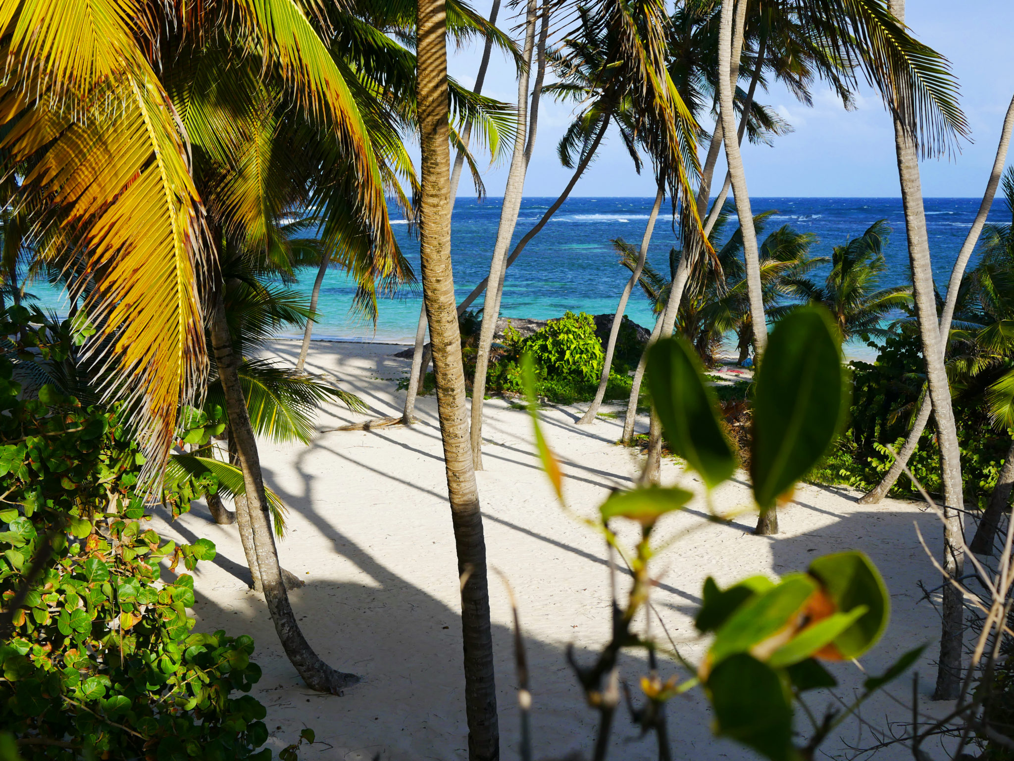 site de rencontre dans l'île des Caraïbes